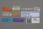 2819055 Philonthus burgeoni ST labels IN