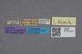 2819063 Leptochirus klimschi ST labels IN