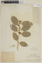 Citrus X aurantiifolia image