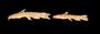94245 Parakysis anomalopteryx