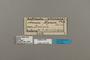 124139 Abananote erinome testacea labels IN