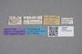 2819081 Atheta pubicollis HT labels IN