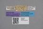 2819087 Thamiaraea solenopsidis HT labels IN