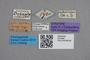 2819092 Atheta debaloana ST labels IN