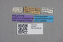 2819094 Thamiaraea modesta HT labels IN