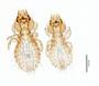 28666 Strigiphilus acadicus PT d IN