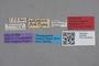 2819095 Platyola paradoxa HT labels IN