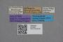 2819098 Falagria semipunctata HT labels IN
