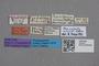 2819101 Plesiosipalia arrowi ST labels IN