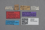 2819103 Myrmecopora boehmi LT labels IN