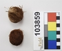 103859 cotton balls of thread