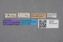 2819110 Gyrophaena permutaria ST labels IN