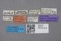 2819114 Brachida minuta ST labels IN
