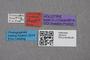 2819115 Gyrophaena frosti HT labels IN