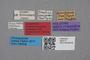 2819117 Brachida brevipennis HT labels IN