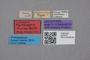 2819118 Myrmecopora minima LT labels IN