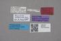 2819123 Brachida alternata HT labels IN