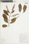 Combretum fruticosum (Loefl.) Stuntz, BRAZIL, F