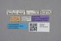 2819126 Brachida burgeoni ST labels IN