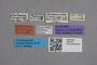 2819133 Myrmecopora paradoxa ST labels IN