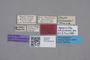 2819122 Heterostiba alutiventris HT labels IN