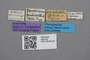 2819143 Gyrophaena punctatissima pubicollis ST labels IN