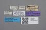 2819144 Leptusa weiseri ST labels IN