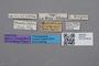 2819145 Gyrophaena quadridens ST labels IN