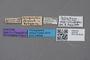 2819149 Leptusa longicollis ST labels IN