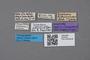 2819150 Leptusa sechellarum ST labels IN