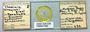 28556 Chapinia traylori PT slide IN