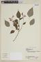 Salvia splendens Sellow ex Wied-Neuw., BRAZIL, F
