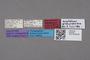 2819160 Polylobus granulifer HT labels IN