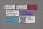 2819162 Polylobus modestus HT labels IN