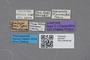 2819164 Atheta kaiseri ST labels IN