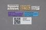 2819168 Leucocraspedum dilutum javanum ST labels IN