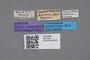 2819169 Leucocraspedum dilutum ST labels IN