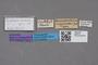 2819170 Leucocraspedum nigerrimum ST labels IN