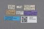 2819172 Oligota uyttenboogaarti HT labels IN