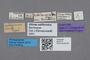 2819173 Stenusa californica ST labels IN
