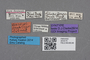 2819175 Silusa arrowi ST labels IN