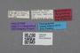 2819177 Polylobus bipunctatus HT labels IN