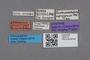 2819179 Leucocraspedum africanum ST labels IN