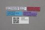 2819185 Diploxenus kubotai HT labels IN