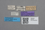 2819187 Dinusina bimaculata ST labels IN