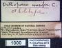 1000 Orthoporus unciferens HT  labels