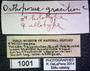 1001 Orthoporus gracilior HT P  labels