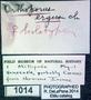 Spirostreptus ergus HT P L
