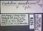 Oxobolus santanus HT  labels