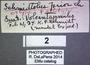 Schmidtolus parvior Types  labels